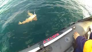 Как сделать электро катушку для рыбалки