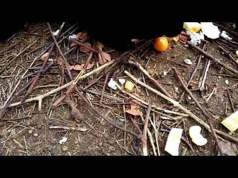 Рецепт похудения травы мать и мачеха