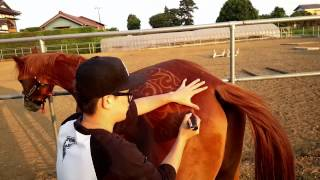 Horse Clipping Art