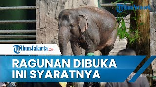 Kebun Binatang Ragunan Telah Dibuka, Hanya Menerima Pengunjung dengan KTP DKI Jakarta