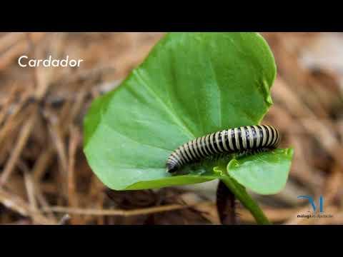 Invertebrados terrestres de la provincia de Málaga