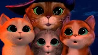Мультфильм про котят