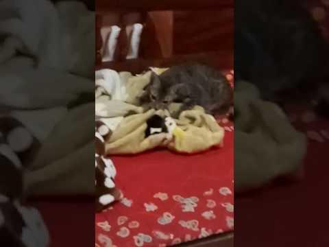 ลูกแมวป้องกัน 3 เดือนของเวิร์ม
