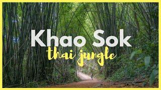 Tajska dżungla I Khao Sok I Thai jungle GH4