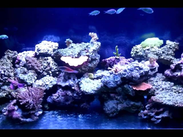 How to Lower Nitrates in a Reef Tank