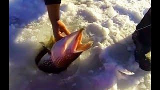 ПОЧЕМУ ОН ОТПУСТИЛ ЭТУ ЩУКУ МНЕ НЕПОНЯТНО Вот это рыбалка ты не поверишь Зрелище не для слабонервных