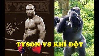 Mike Tyson NGÔNG CUỒNG Từng Định So Tài KHỈ ĐỘT Nặng 160KG Ở Vườn Thú