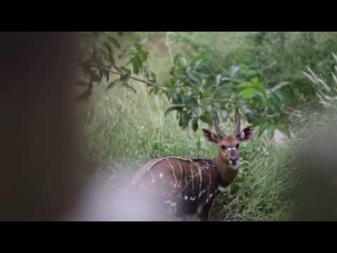 Africa Albida Tourism are proud to present a short clip featuring two iconic destinations, Chobe Botswana and Victoria Falls, Zimbabwe. Watch this video to experience our two beautiful destinations in Victoria Falls and Chobe. 