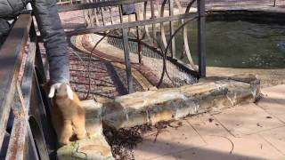 Кошка и тюлень. Сафари парк львов Тайган