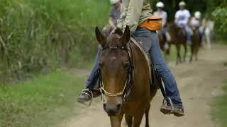 Blazing Saddles Cairns