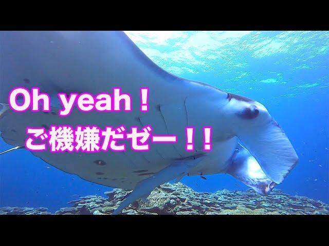 石垣島ダイビング|マンタと一緒にご機嫌なダイビング!|ビーチライフ石垣島