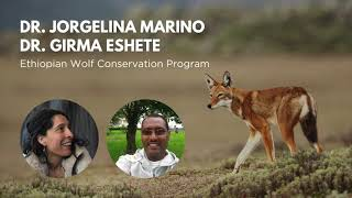 WCN Virtual Spring Expo 2021 | Ethiopian Wolf Conservation Project