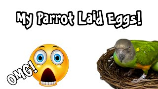 OMG My Parrot Laid Eggs! Should I sell them??