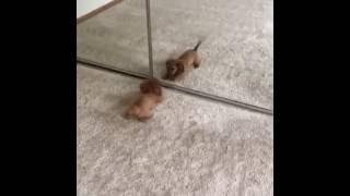 animale catelusul comic