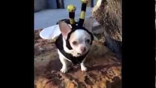 Приколы! Подборка УГАРНЫХ ситуаций с собаками, февраль 2014 ! Часть 1 Funny Cats Compilation