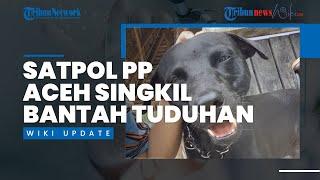 Diduga Siksa Anjing Canon hingga Mati, Satpol PP Aceh Singkil Bantah Tuduhan, Sebut Berita Bohong