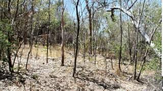 2015-09-25 Audio, Kakadu, NT