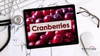 Recurrent UTI and Cranberries - Preview This Week's EBU
