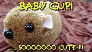 """BABY GUPI - SOOOOOOO CUTE"" -Vorstellung"