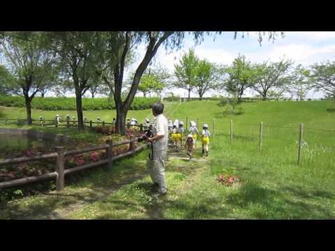 Gakkohojinshiraumehigashigyojin Kindergarten