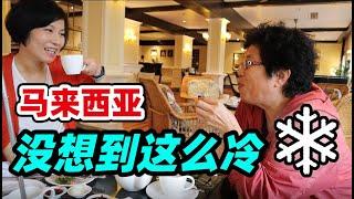 60中国人在大马生活:金马伦怎么这么冷❄英伦风情的避暑圣地Cameron【马来西亚 Malaysia】