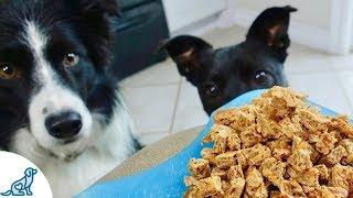 The Best Homemade Dog Treats - Professional Dog Training Tips