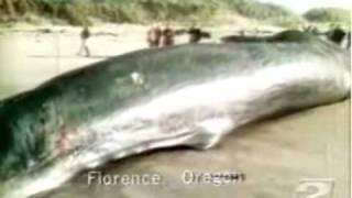 Die besten 100 Videos Wal wird in die Luft gesprengt und trifft Autos