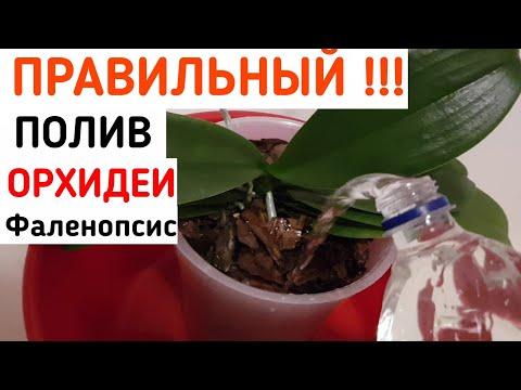Как ПРАВИЛЬНО поливать ОРХИДЕИ | ПРАВИЛЬНЫЙ полив ОРХИДЕИ | как правильно полить орхидею | орхидея