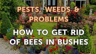 How to Get Rid of Bees in Bushes