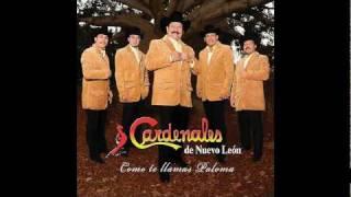 LOS CARDENALES DE NUEVO LEON - ASESINO A SUELDO