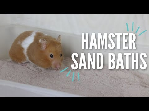 All About Hamster Sand Baths!