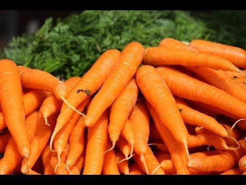 Морковь польза и вред. Удивительные свойства, состав, морковь по корейски