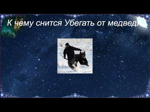 К чему снится Убегать от медведя (Сонник)