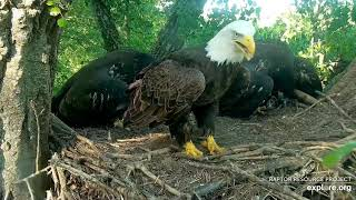 Decorah Eagles 6-2- 20, 6:55 pm DM2 with fish #5, D34 gets it, mantles