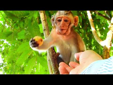 Thanks For Sweetie Fruit I Orphan Copper really like fresh fruit from Cameraman