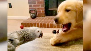 So FUNNY you'll DIE LAUGHING! - Best FUNNY ANIMALS 2019