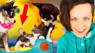 ПЕРВАЯ ВСТРЕЧА КОТЕНКА С СОБАКАМИ! ПЕРВАЯ РЕАКЦИЯ СОБАК НА КОШКУ MAGIC FAMILY
