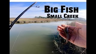 Small Creek Fishing with LIVE SHRIMP and CRAB - Inshore Fishing Tips