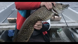 Правила рыбалки в карелии на онежском озере
