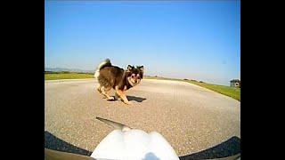 FPV Flight, Landing exercises & Funny Moments    Cessna 162