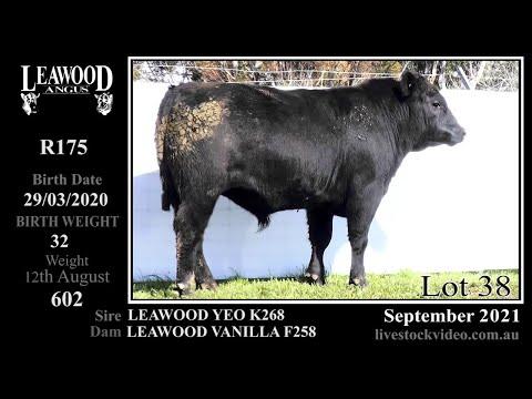 LEAWOOD D YEO R175