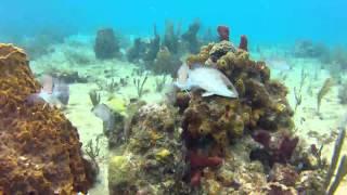 preview picture of video 'Les Barthe à Port Louis 971'