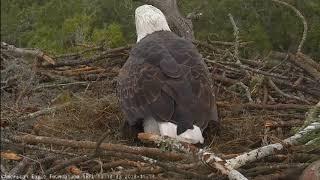 AEF NEFL Eagle Cam 11-14-18: Welcome NE20!