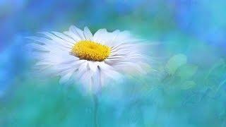 "Peaceful Music, Relxing music, Instrumental music ""Summer Memories"" by Tim Janis"