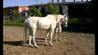 ich will ein pferd