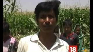 वीडियो: छत्तीसगढ़ के इस इलाके में घुसे 75 हाथी, दहशत में लोग