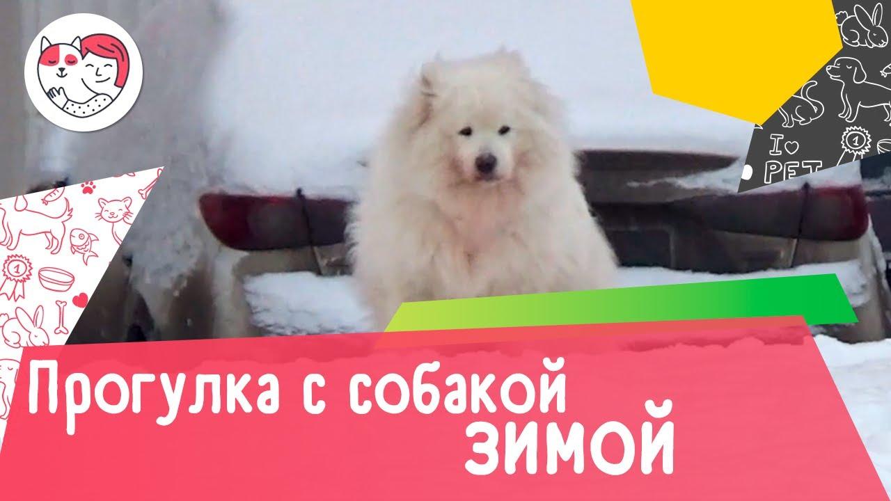 6 правил прогулки с собакой зимой