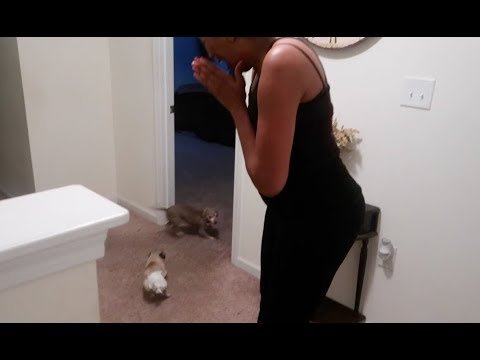 DAUGHTER SURPRISES MOM WITH PUPPY AND HER SONS (EXTREMELY EMOTIONAL)