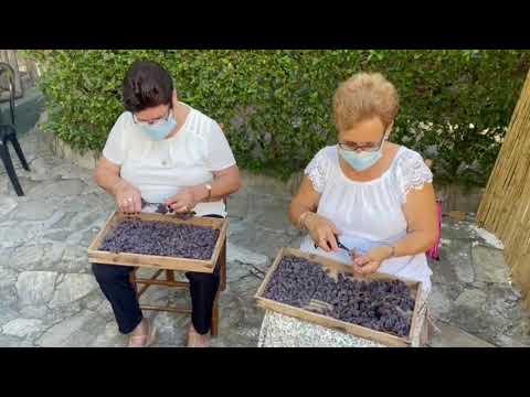 Salado afirma que la nueva Asociación SIPAM de la uva pasa en la Axarquía favorecerá al turismo en la comarca y a las economías familiares