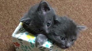 Смешные Приколы с Животными до слез, смешные коты и смешные собаки Калейдоскоп за 26 10 2018